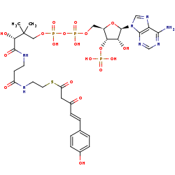 Picture of (4-coumaroyl)acetyl-CoA (click for magnification)