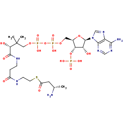 Picture of L-3-aminobutanoyl-CoA (click for magnification)