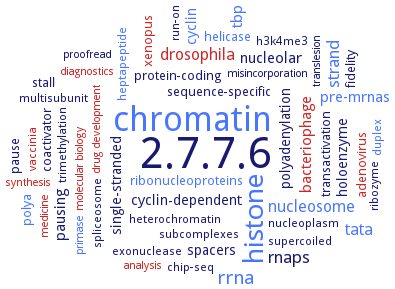 BRENDA - Information on EC 2 7 7 6 - DNA-directed RNA